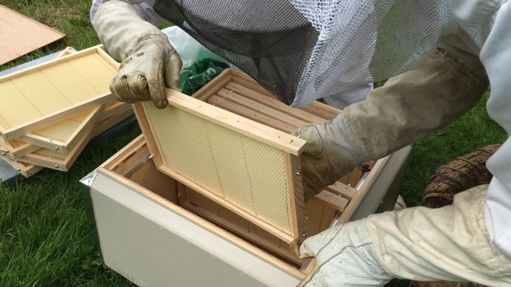 Vad kostar bin? Hur mycket kostar en Bikupa? Köpa bidrottning.