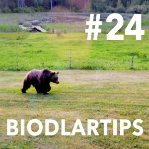 Biodlartips-24-Foto-Mikael-Kjellström